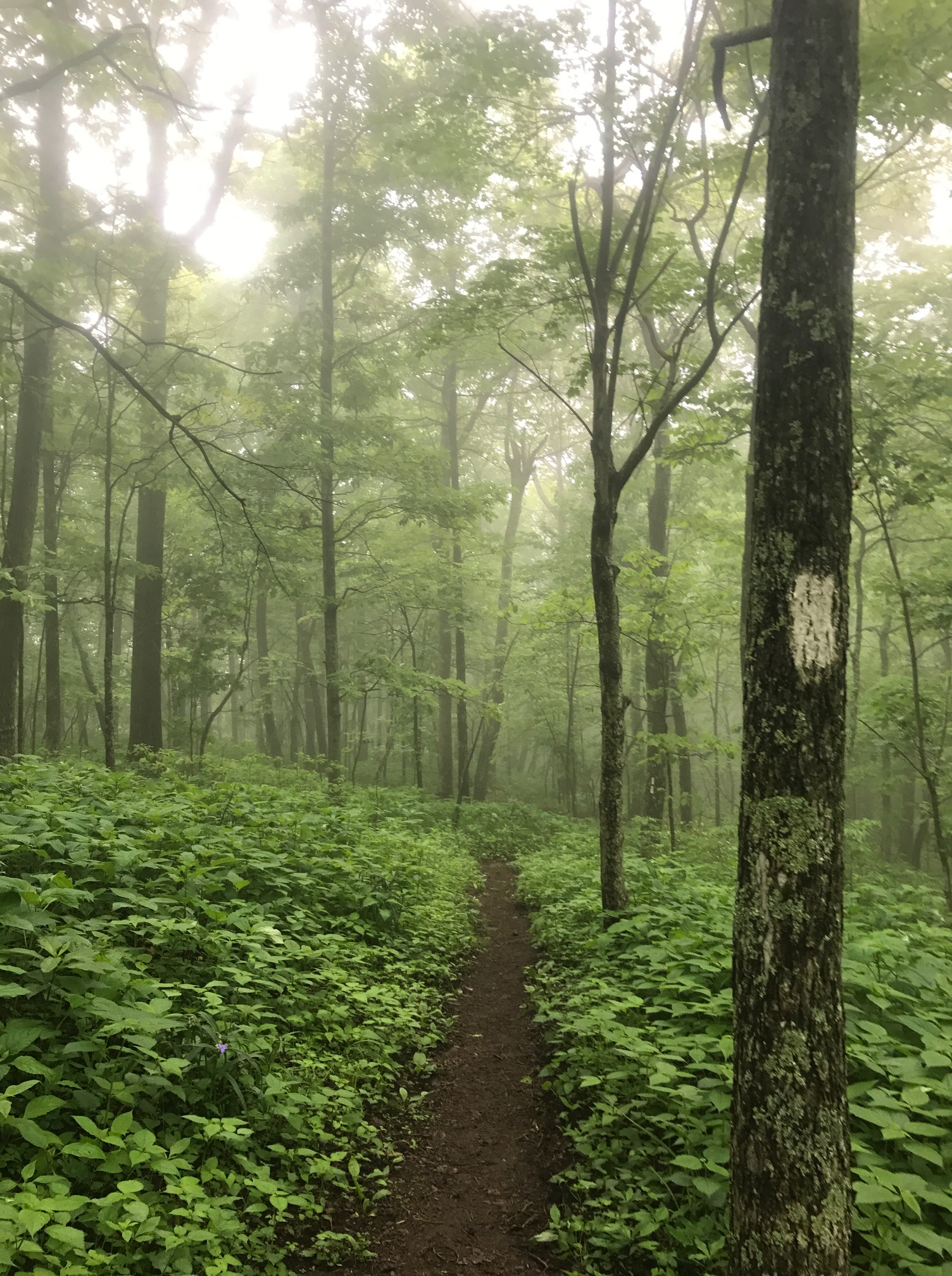 The Appalachian Trail runs from Georgia to Maine and is recognizable by its signature white blazes.